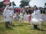 Tendring Hundred Show July 2013